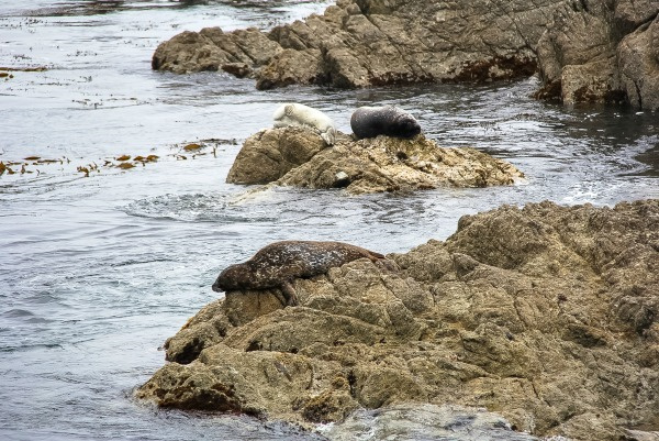 seals sleeping on rocks in the ocean