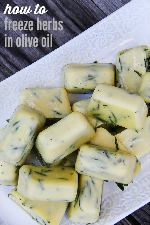 fresh rosemary frozen in ice cube trays with olive oil