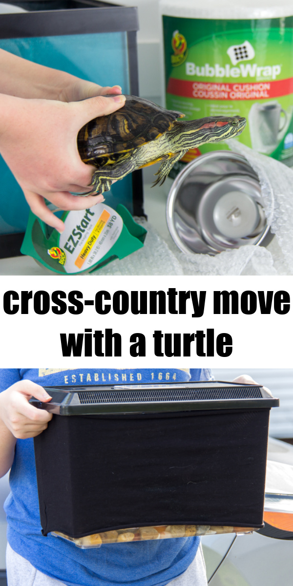 moving cross-country with a turtle Pinterest image