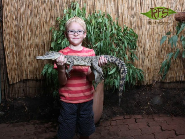 a boy holding a crocodile at kuranda