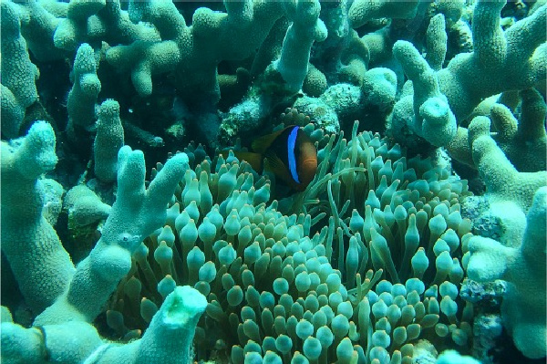 coral reef with a small blue and orange tropical fish