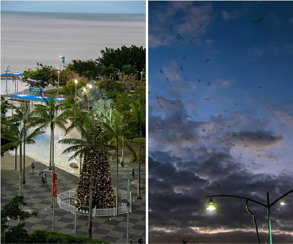 view from the mantra hotel at dusk in cairns