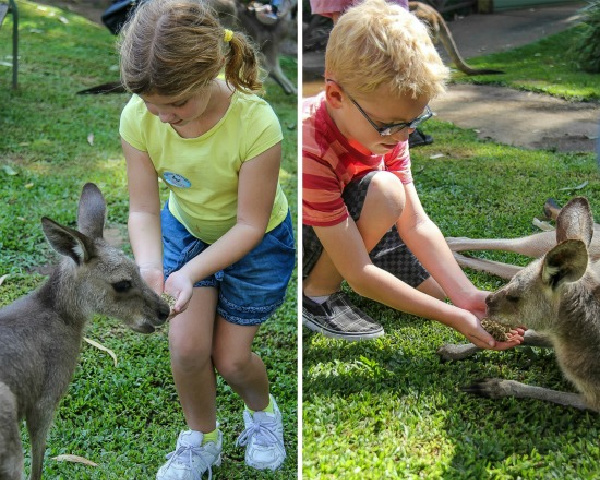 kids feeding kangaroos at kuranda nature park