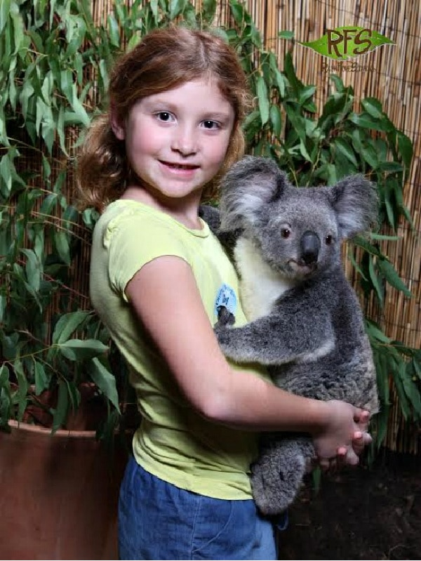 girl cuddling a koala at kuranda nature park