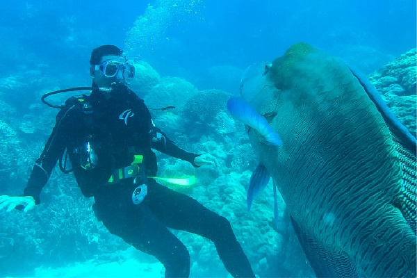 man scuba diving in the great barrier reef with a huge fish