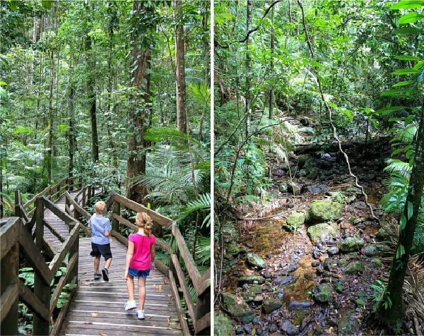 Kids walking on the Jindalba Boardwalk in the Daintree Rainforest