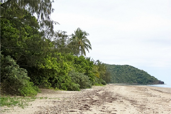 the beach at the end of the mangrove boardwalk in the daintree rainforest