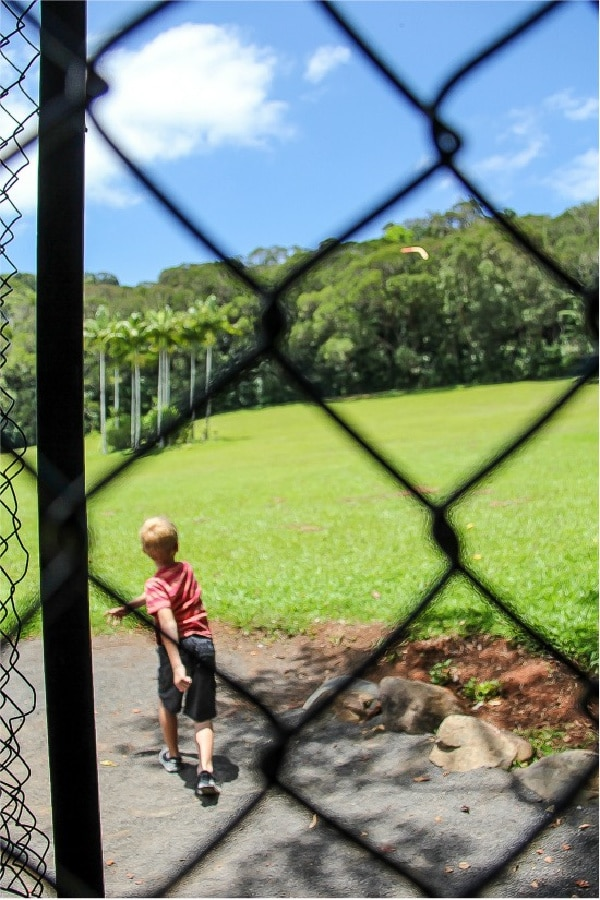 a boy throiwng a boomerang at kuranda nature park