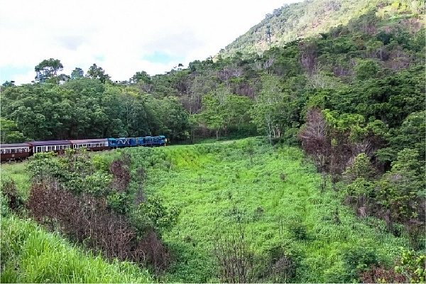 train moving through the trees to kuranda village