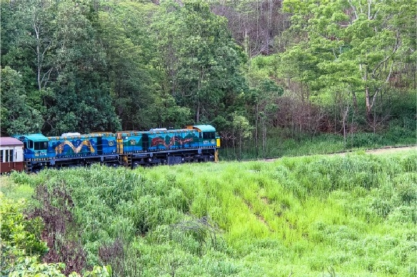 painted train engine going through the forest in Queensland
