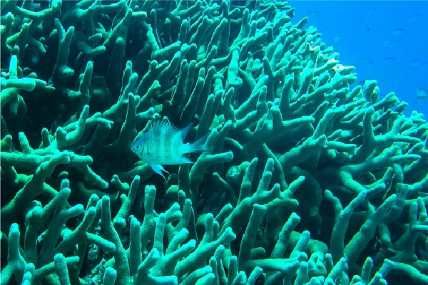 small tropical fish swimming in a coral reef