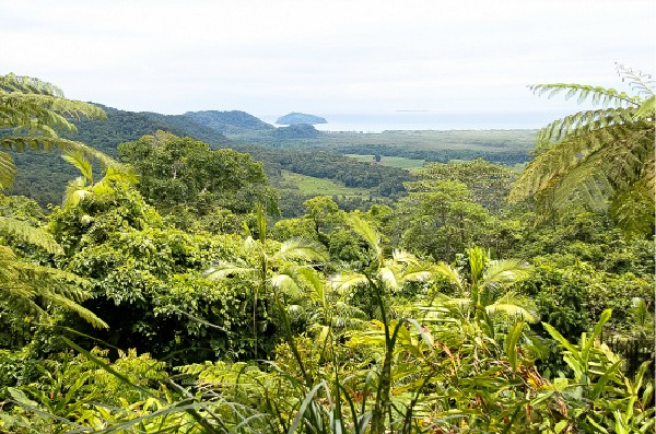 The view from Mt. Alexander at Cape Tribulation