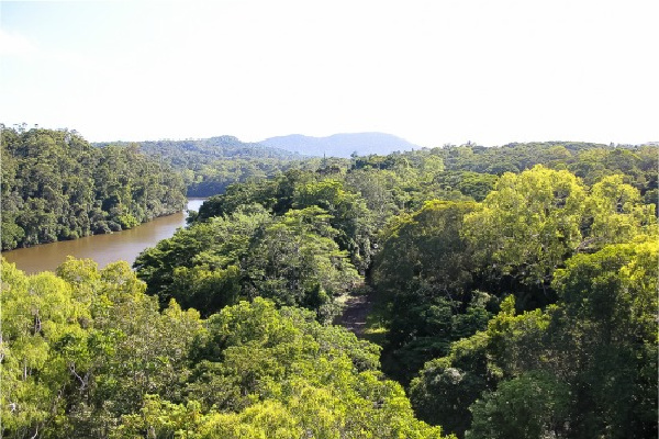 view from the kuranda skyrail cable car