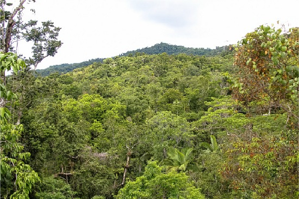 looking over the daintree rainforest from the discovery center lookout