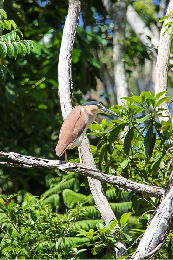 bird in the kuranda rainforest
