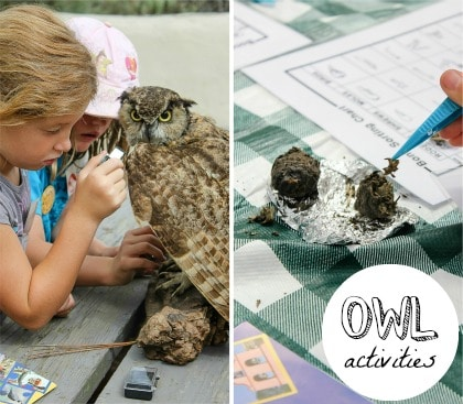 owl study activities for kids