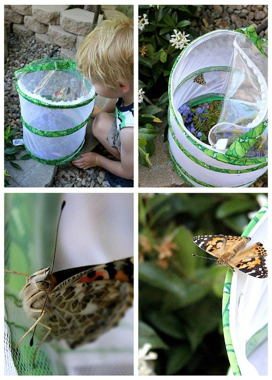 kids releasing butterflies from a butterfly hatching kit