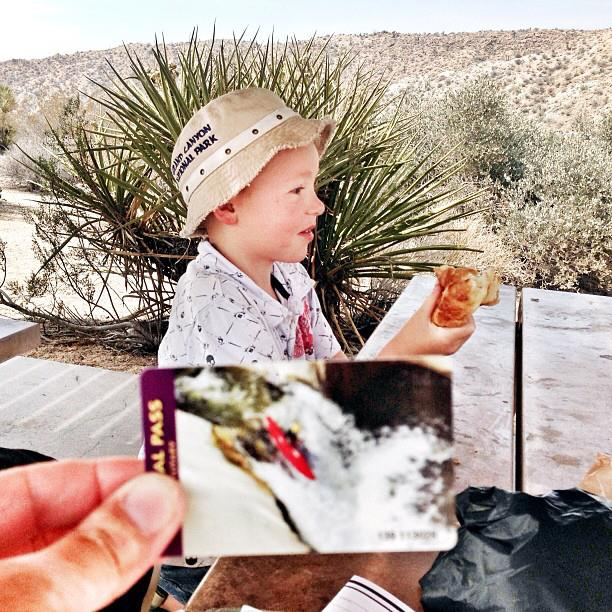 visiting Joshua Tree and Cottonwood Springs with kids