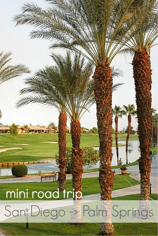 Palm Trees and walking paths at the Westin Palm Springs
