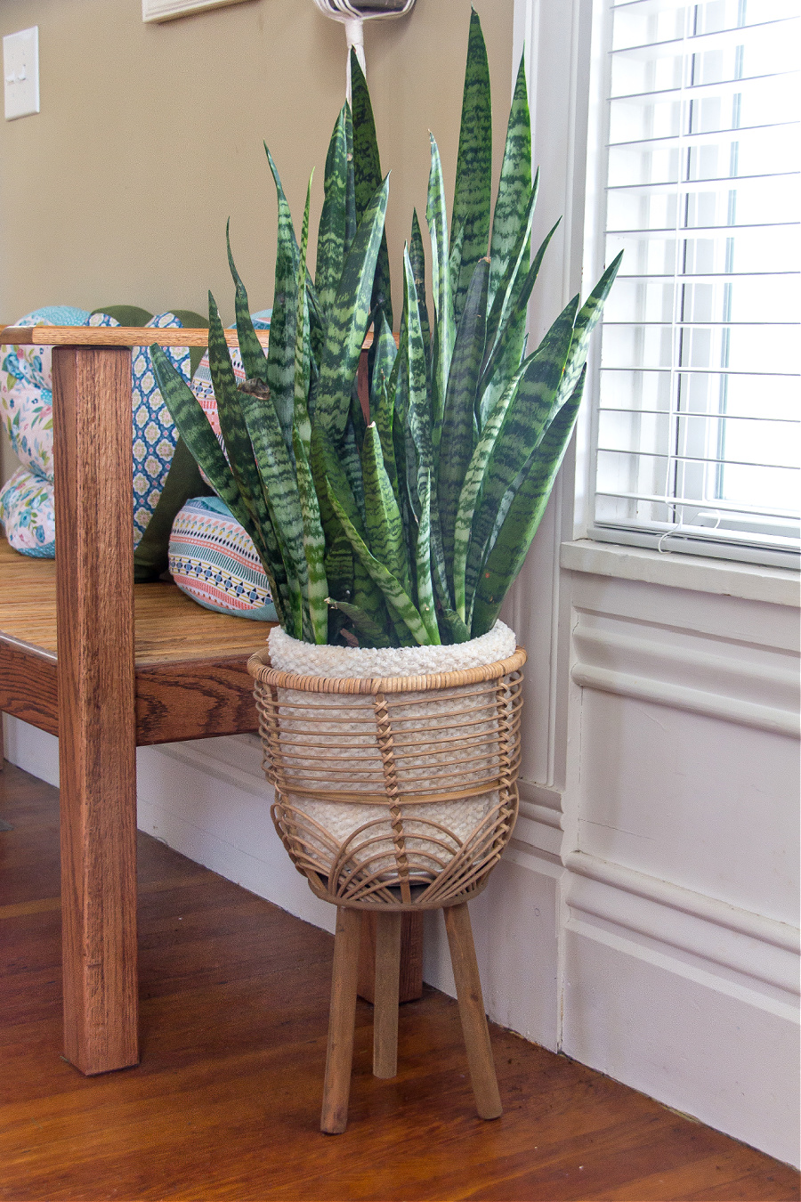 A snake plant in a cane plant stand with a hand knit cozy around the pot.