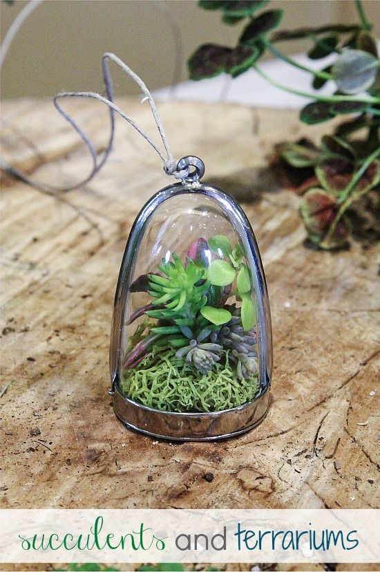 Succulent cuttings inside a terrarium necklace.
