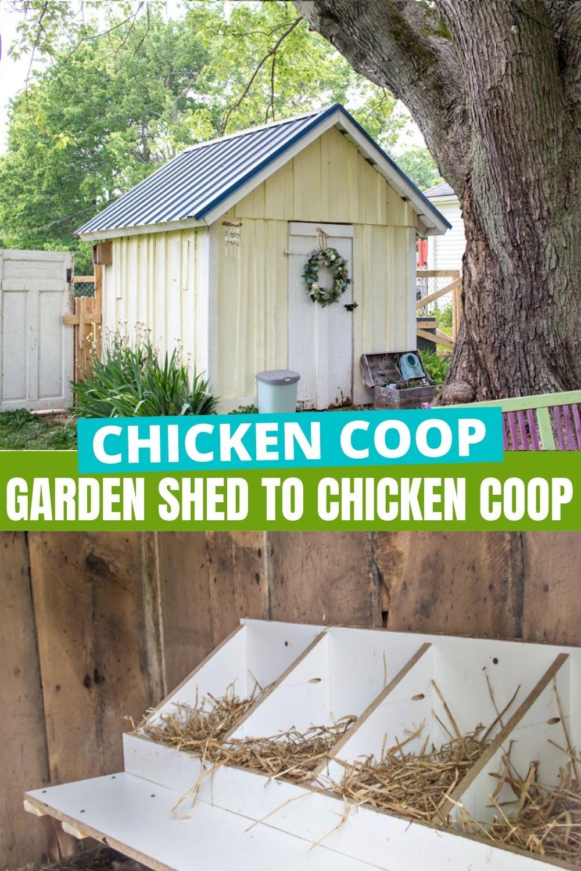 convert a garden shed to a chicken coop Pinterest image