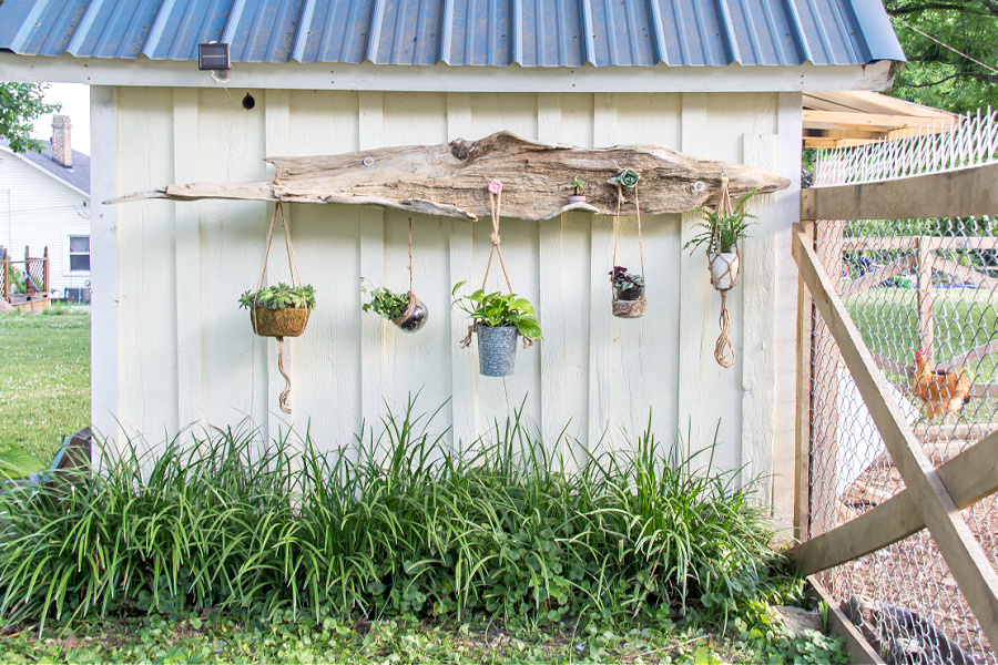 A DIY driftwood hanging planter with planter hooks on the side of a garden shed.