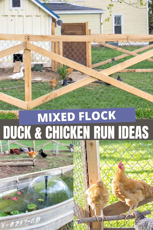 duck and chicken run ideas Pinterest image