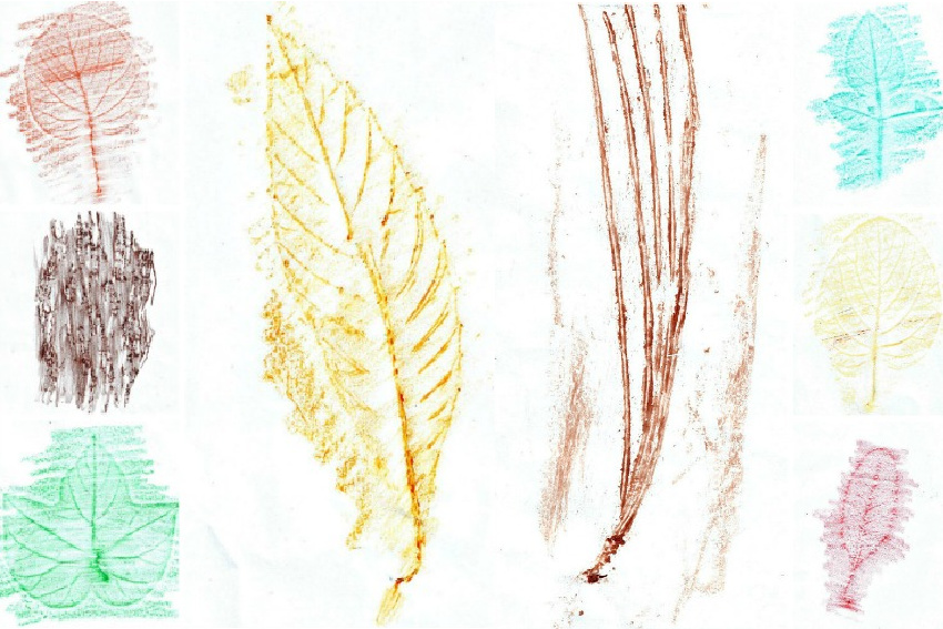 bark, pine needle, and leaf rubbing ideas for kids