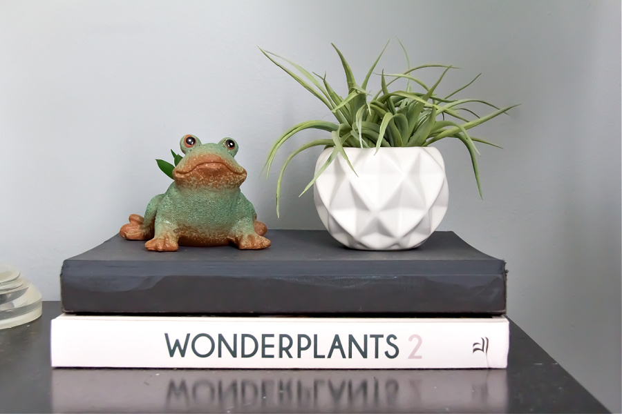 The Wonderplants 2 book with succulent planters on top.